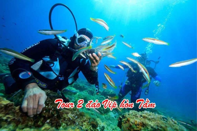 tour 2 đảo vip